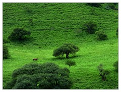 Rural scene (Anders Hjertn) Tags: horse caballo andes losandes hst