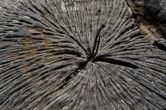 DSC_6718-1 (AndrewBaillie) Tags: wallpaper tree nikon tokina1224 stump covehithe d7000