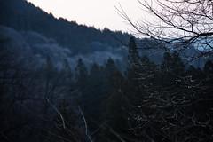 (nonononobu) Tags: mountain japan forest landscape countryside woods   morningdew gunma    morningglow