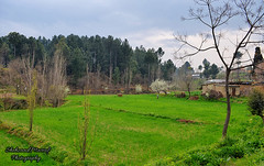 Colors of Spring (Shehzaad Maroof Khan) Tags: flowers pakistan green rain clouds season spring nikon village fields balakot mansehra kpk