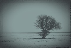 Like Roots (Adi Berger Photo) Tags: winter blackandwhite bw tree romania panasonicfz1000