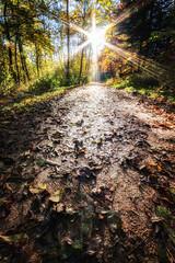 IMG_2464-Bearbeitet-Bearbeitet.jpg (MSPhotography-Art) Tags: morning autumn nature misty germany landscape deutschland nebel outdoor herbst natur wolken alb landschaft wandern wanderung badenwrttemberg burghohenzollern albtrauf schwbschealb
