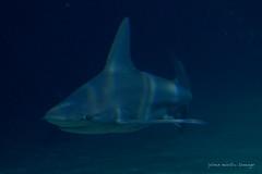 valencia 2016-104 (hiroke636) Tags: valencia mar peces oceano oceanografic