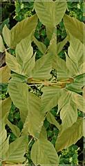Opiniones (valdebenito_matias) Tags: verde planta collage hojas colores placer