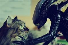 Encounter (Hansmannn) Tags: cats cat amy alien avp encounter giger
