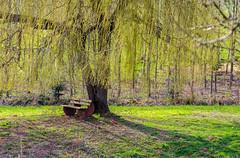 Die Bank und der Baum ...... The Bank and the tree (thorvonasgard) Tags: light sun nature bench licht spring sitting natur meadow wiese bank bloom rest sonne baum frhling sitzen blhen ruhe