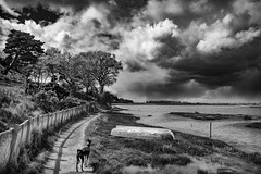 There may be trouble ahead..... (miniwaites) Tags: trees sky blackandwhite dog storm tree water monochrome rain clouds fence river mono boat path whippet
