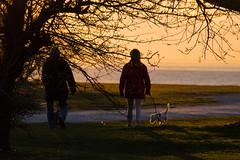 Walking (Infomastern) Tags: sunset sea people tree water malm vatten trd hav solnedgng sibbarp mnniska