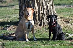 April 3, 2016 - A couple of Thornton dogs enjoy some nice weather. (Ed Dalton)