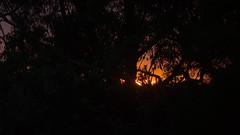 Peeking through (Occasionally Focused) Tags: morning light sunrise dawn pentax takumar k30 unmetered rawtherapee justpentax takumarbayonet takumarbayonet135mm125