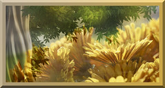 My Summer Dance! (Elisafox22 slowly catching up ;o)) Tags: summer tree green leaves sunshine yellow mystery daisies photomanipulation photoshop magic border warmth images textures gerbera heat mysterious photomanipulated postprocessing hss ipad sliderssunday elisafox22 elisaliddell©2016