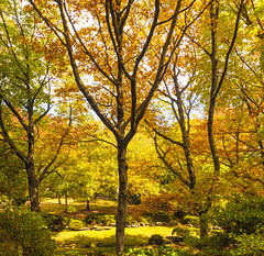 Autum in the Mountains (bsam4109) Tags: autumn trees garden landscape welding weld bluemountains everglades leura