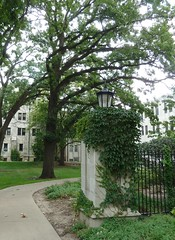 River Forest, IL, Dominican University, Main Gate (Mary Warren (6.7+ Million Views)) Tags: green college lamp gate entrance ivy vine dominicanuniversity riverforestil