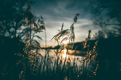 Love of nature (Tim RT) Tags: sun lake blur love reed nature clouds sunrise reeds germany prime tim spring nikon dof natural bokeh outdoor moment fullframe capture rt reutlingen d810 20mmf18 nikor20mm