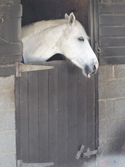 My Companion at Work Today (ART NAHPRO) Tags: horse sussex spring april stable 2016