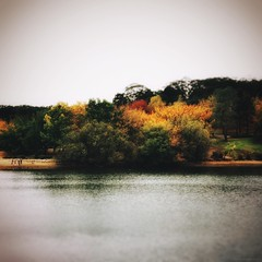 Everyday Adelaide No. 242-3 (Autumn/Winter) Mount Lofty Botanic Gardens (michellerobinson.photography) Tags: park color nature beautiful beauty square landscape outdoors photography landscapes countryside pond scenery colours seasons exploring scenic tranquility australia 11 smartphone squareformat adelaide inspirational southaustralia botanicgardens colourphoto adelaidehills mobilephotography phoneography michellerobinson mountloftybotanicgardens procamera flickrelite iphonephoto shotwithiphone iphoneography iphonephotoapps shotoniphone 4tografie procameraapp instagram smartphonephotography snapseed vscocam michmutters southaustralianature shotoniphone6plus shotwithiphone6plus exploreadelaide everydayaustralia