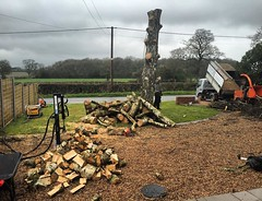 "Complete service today working with stump removal services! Birch dismantle, stump grind and all timber being split. #wardenstreecare <a style=""margin-left:10px; font-size:0.8em;"" href=""http://www.flickr.com/photos/137723818@N08/26416012826/"" target=""_blank"">@flickr</a>"