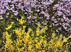 Lauschen auf das Lied des Windes (heinrich_511) Tags: world pink summer color green primavera yellow garden spring heart thoughts d750 noise hl frhling 1485mm