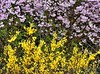 Lauschen auf das Lied des Windes (heinrich_511 on/off) Tags: world pink summer color green primavera yellow garden spring heart thoughts d750 noise hl frühling 1485mm