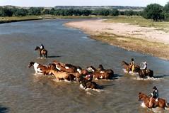 Cheyenne River Crossing (fiddlersgreen) Tags: cowboys rivercrossing remuda