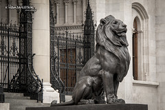 The lion guarding the entrance (v.Haramustek) Tags: city travel wild sculpture tourism animal statue bronze cat fence iron hungary fear budapest lion entrance kitty parlament aslan guarding arhitecture