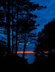 Blue hour (Jakob Arnholtz) Tags: sunset nature strand natur silhouet solnedgang coniffer fyrretr veddinge arnholtz