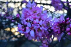 Tiempo de almendros (bemperatriz) Tags: home flor colores almendros hellin
