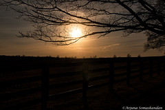 Along Mountain View Road - -5 (digithief) Tags: ca trees sunset horses ontario canada silhouette nikon d750 caledon