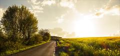 Towards the sun (Torsten Frank) Tags: deutschland landwirtschaft pflanze feld sonne raps ruhrgebiet nordrheinwestfalen wetter weg rapsfeld mittelgebirge strase bltenpflanze wirtschaftsweg bergischmrkischeshgelland bergischsauerlndischesunterland