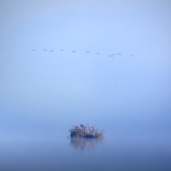A walk in silence II (ilias varelas) Tags: light mist nature water birds fog landscape mood walk atmosphere greece silence land ilias varelas