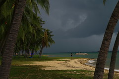 Alone in troubles (Davide C.77) Tags: park sea storm beach water rain weather clouds canon palms singapore asia alone ray palm lone badweather eastcoastpark canon6d