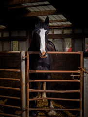 horse clydesdale-4240022 (E.........'s Diary) Tags: st andrews fife eddie denbrae rossolympusomdem5markiiscotlandapril2016spring