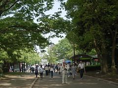 R0010906 (koyaman3422) Tags: harajuku ricoh a12  gxr