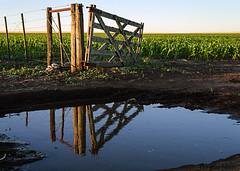 espejo de agua (horacio marin) Tags: reflejo tranquera charco sembrado