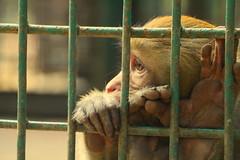 Prison Life - IV (Rafee Mizan Khan Chowdhury Niloy) Tags: people nature canon garden botanical zoo wildlife photowalk dhaka mirpur 70d