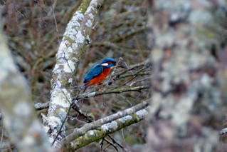 My First Kingfisher