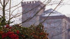In Görlitz (roman.dorokhov) Tags: city schnee winter red sky orange white snow rot castle nature architecture canon germany outside deutschland photography eos photo europa europe afternoon foto dorf village cloudy outdoor cloudily saxony natur january himmel palace görlitz sachsen stadt architektur chilly noon cheerful dslr schloss 169 palast frontier burg januar mittag draussen wolkig grenze 500d weis nachmittag bedeckt bewölkt rötlich kühl suffuse drausen heiter outofdoor bewoelkt roetlich