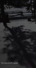 Snowy Shadows (Joey Angstman) Tags: winter snow cold colorado frost grandlake