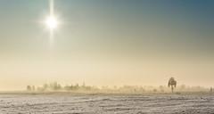 Winter morning silence (piotrekfil) Tags: trees winter sky sun snow nature field sunrise landscape pentax poland piotrfil