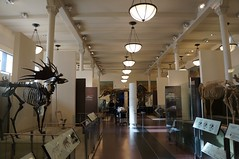 American Museum of Natural History (Hlne Gondelle - Photography) Tags: travel sculpture usa newyork history tourism museum natural manhattan culture visit naturalhistory explore american knowledge discover americanmuseumofnaturalhistory beautifulplace