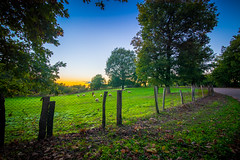 (Stavros A.) Tags: road park autumn trees sunset tree green fall nature grass leaves forest fence season landscape countryside oak woods sheep outdoor path country stock meadow foliage explore greece ilia peloponnese       tokina1628 nikond750  stavrarg