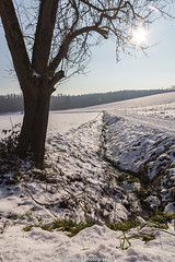 Winter Rivulet I (boettcher.photography) Tags: schnee winter snow tree nature natur january bach baum januar rivulet sashahasha boettcherphotography