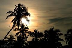 #Goa #shoot #trip #nikon #camera #friends #coconut #trees #sunlight #happiness #love (naman_chourasiya) Tags: camera trip trees friends sunlight love nikon shoot coconut goa happiness