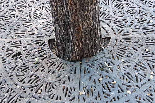Austin - Handcuffed Tree