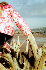 Driftwood Beach (a.lower.photo) Tags: film beach analog 35mm florida olympus adventure explore driftwood daylightfilm northflorida floridabeaches olympusom1n filmisnotdead cinestill filmfeed believeinfilm cinestill50d