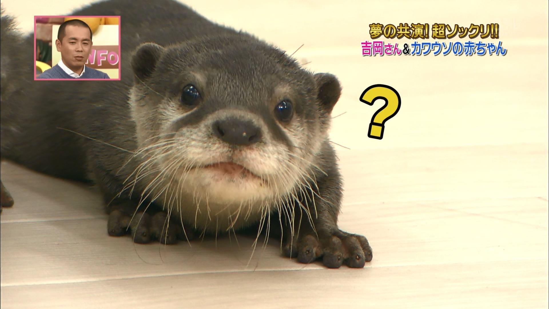 2016.02.27 全場(天才!志村どうぶつ園).ts_20160227_211026.506