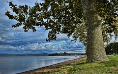 DSC_1145 Vista di Capodimonte (VT) dal Lago di Bolsena (Giovanni Pilone) Tags: panorama landscape vista albero acqua veduta viterbo lazio capodimonte allaperto lagodibolsena
