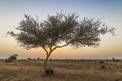caught somewhere in time (dr_zook81) Tags: sunset sky orange sun india plant tree nature grass leaves yellow landscape evening sand alone branch pattern escape desert wind outdoor patterns branches horizon dry single land lonely shrub distance desolate arid rajasthan distant vast