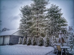 Backyard HDR (igorotak!) Tags: trees winter snow mobile hdr pointshoot android phonephotography oneplusone