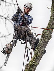 Hanging by a rope. (Ripley's fish planet) Tags: chainsaw treecutting arborist treeclimb
